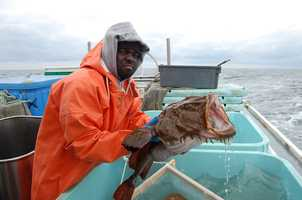 """Monkfish, sometimes known as """"Poor man's lobster,"""" is a deep-dwelling fish that presents a fearsome face."""