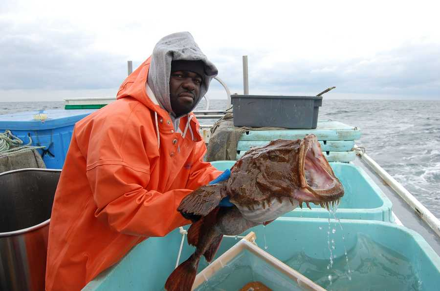 "Monkfish, sometimes known as ""Poor man's lobster,"" is a deep-dwelling fish that presents a fearsome face."