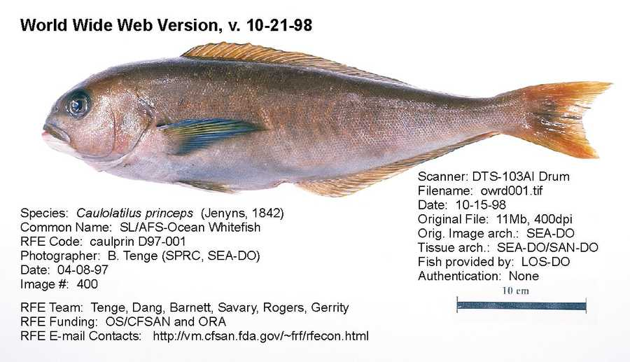 This is what Tilefish actually looks like. It is also known as Ocean Whitefish.