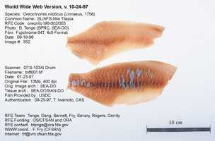 Tilapia is one of the most widely consumed fish in the country.