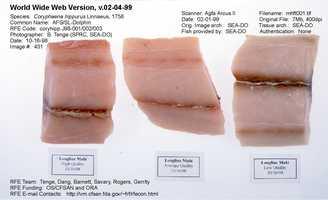 Mahi-mahi is another popular seafood choice.