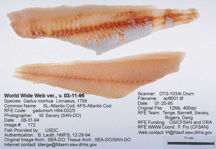 Cod can be several kinds of fish.