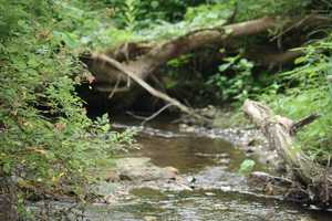 """In 1991, citizens of the White Clay Creek area requested that the creek and its tributaries be considered for inclusion in the National Wild and Scenic Rivers System. The White Clay Creek study represents the first time an entire watershed was studied for designation. In 2000, the White Clay Creek and several tributaries—including parts of the East Branch and all of West Branch, Pike and Mill Creeks, and Middle Run—were added to the National Wild and Scenic Rivers System,"" states the National Wild and Scenic River System website."
