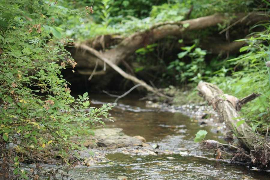 """""""In 1991, citizens of the White Clay Creek area requested that the creek and its tributaries be considered for inclusion in the National Wild and Scenic Rivers System. The White Clay Creek study represents the first time an entire watershed was studied for designation. In 2000, the White Clay Creek and several tributaries—including parts of the East Branch and all of West Branch, Pike and Mill Creeks, and Middle Run—were added to the National Wild and Scenic Rivers System,"""" states the National Wild and Scenic River System website."""