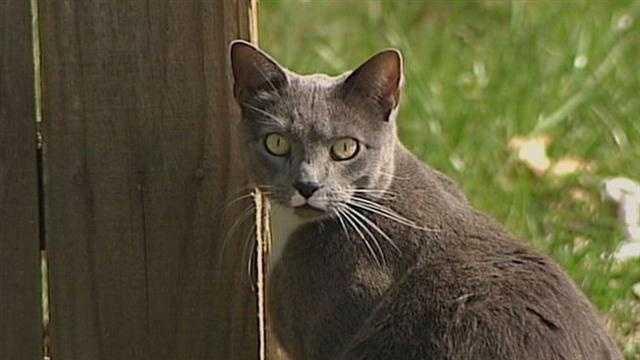 Stray cat trap