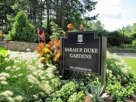 """No. 9 is the Sarah P. Duke Gardens in Durham, North Carolina. Located on the grounds of Duke University, travelers can explore over five miles of walkways through diverse flora, including vibrant daffodils and blossoming cherry trees. The newly-opened """"Discovery Garden"""" educates guests about sustainable landscaping and features organic vegetable beds, an orchard, and two cisterns for recycling rainwater. Open year-round, admission is free."""
