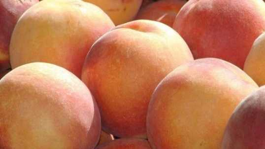 5.23.13 fruits