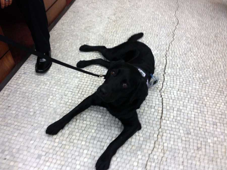 The dog will help defendants relieve anxiety, allowing them to focus on treatment.