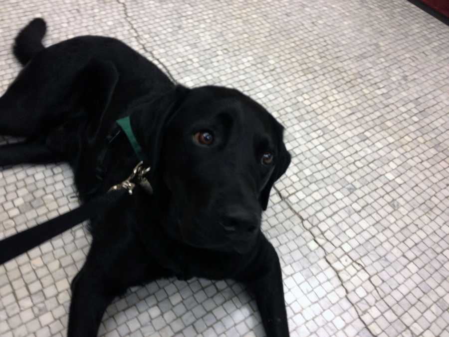The York County Probation Department introduced its newest member Monday -- Buster.