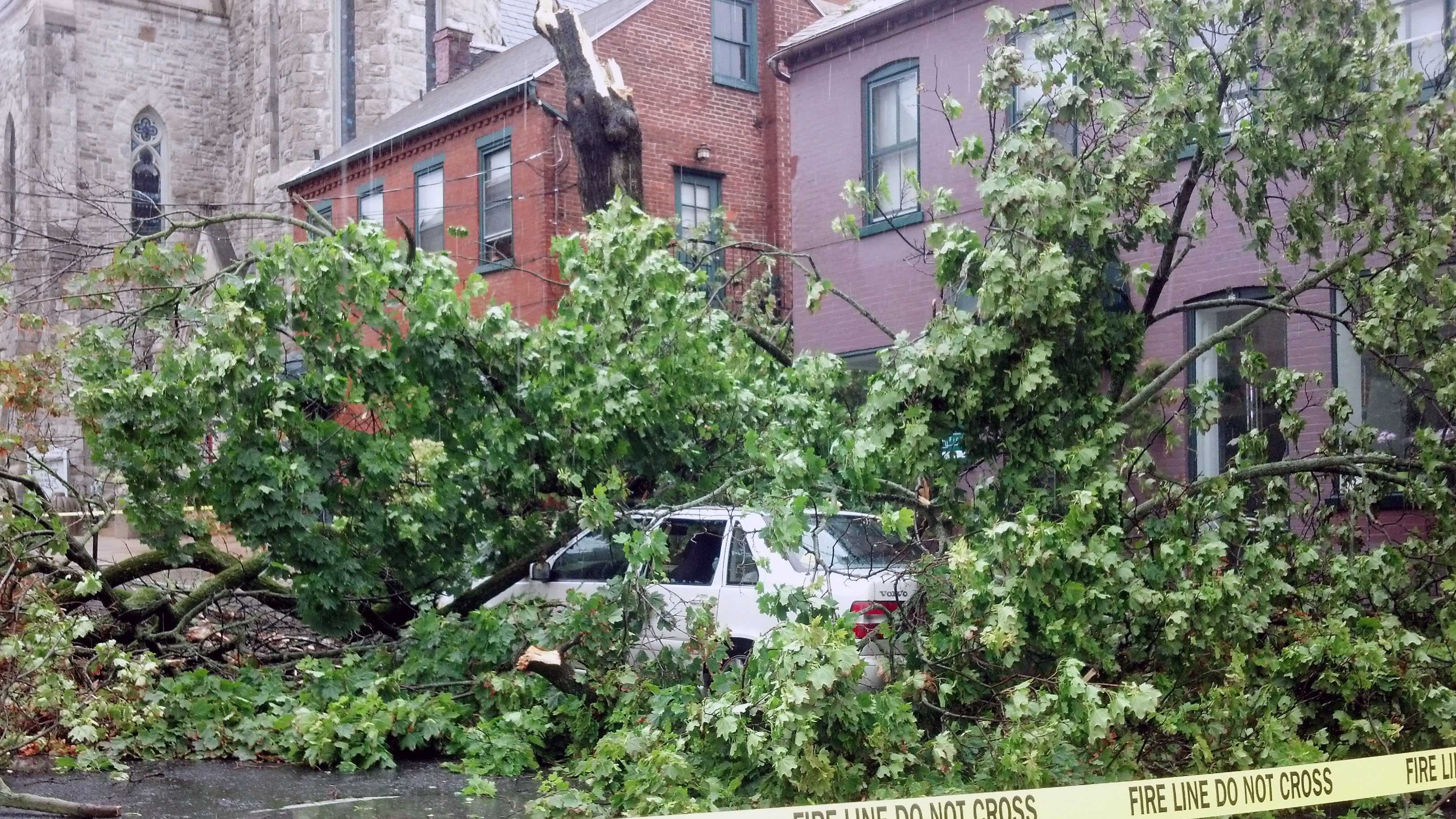This tree was knocked down in the 200 block of West Orange Street in Lancaster.