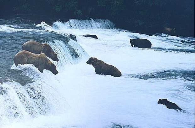 Katmai National Park– Alaska: $11,900,000