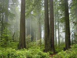 Redwoods National Park– California: $42,500,000
