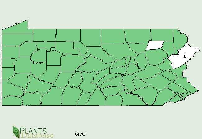 The green areas show counties where bull thistle has been confirmed.