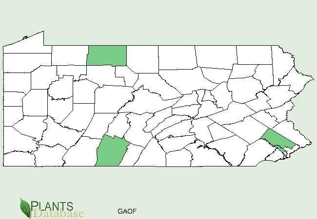 The green areas show counties where goatsrue has been confirmed.