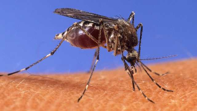 """4. Blood type. Your blood type affects how attracted mosquitoes are to you. """"So if you have type O blood, you're probably twice as likely to get bit as if you have type A. If you have type B blood, it's somewhere in the middle,"""" said mosquito expert Mike Mclean."""