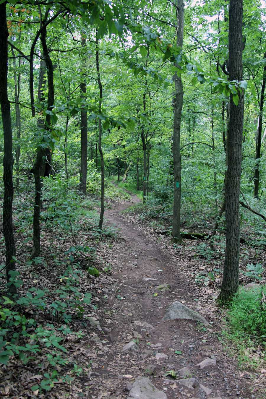 Begin this hike from the campground contact station, Scotts Run Lake, Hopewell Furnace Visitor Center, or Route 345/Shed Road.