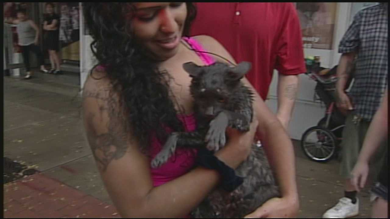 9.12.13 Firefighters rescue cat from storm drain