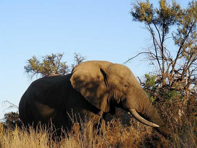 9: Elephants