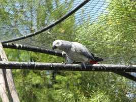 6: Parrots
