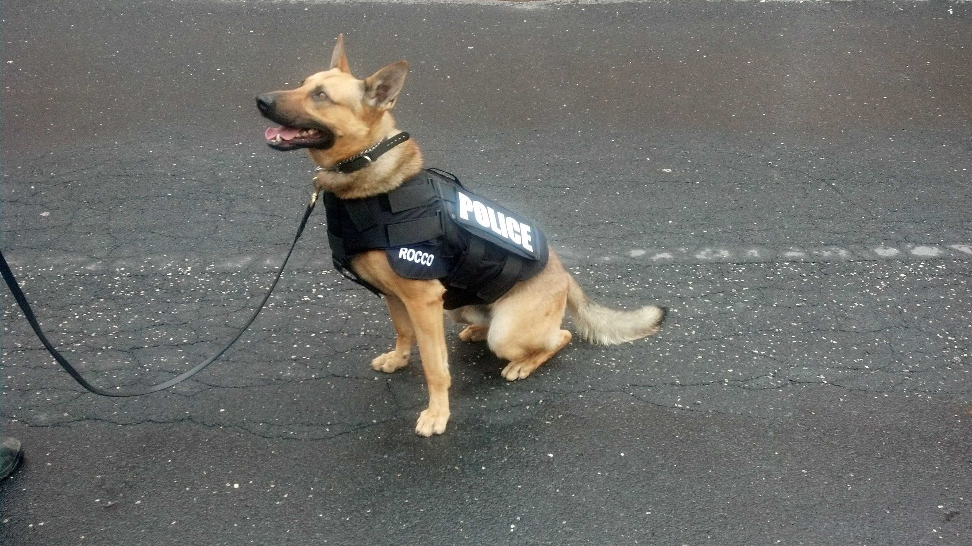Many police dogs wear ballistic vests like this K-9 from Lower Allen Township.
