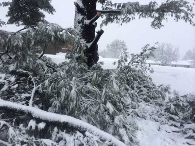 Heavy snow snaps a large branch at WGAL's Lancaster studios, 11 a.m. Monday.