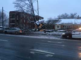 The driver of the car told News 8's Ed Weinstock that he had just gotten off work and was driving home when the tree came down right in front of him. Springettsbury Township, Wednesday, 7 a.m.