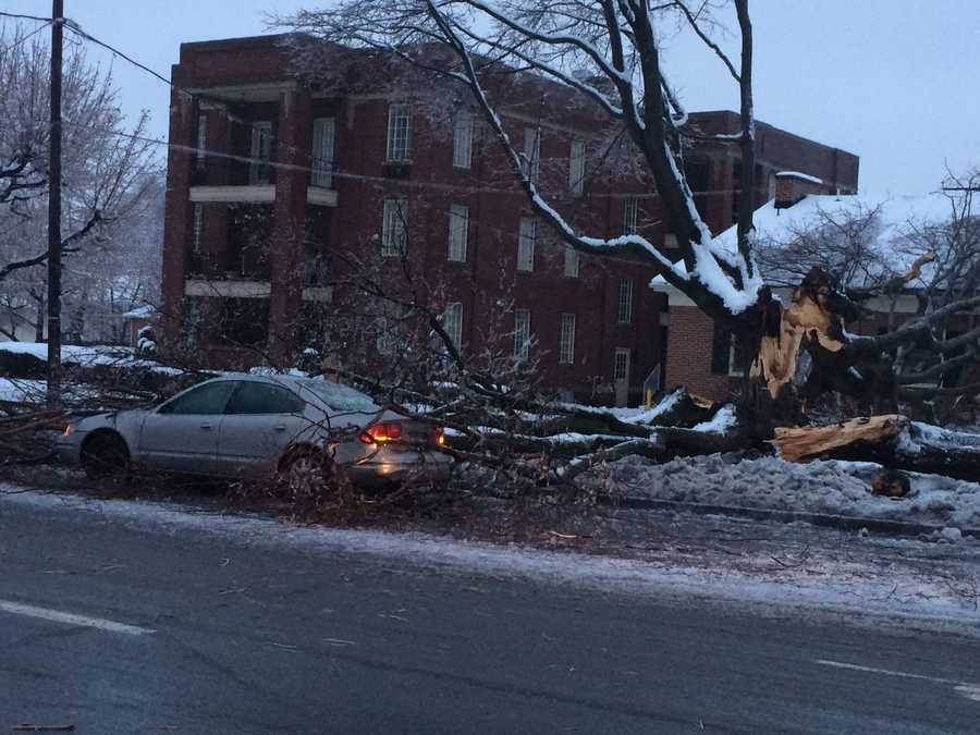 This tree fell on a house and car in Springettsbury Township, Wednesday, 7 a.m. The area is near the intersection of East Market and Vernon streets.