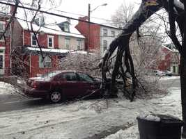 West King Street, Lancaster, Wednesday, 8 a.m. The driver said the tree came down on the vehicle while driving.