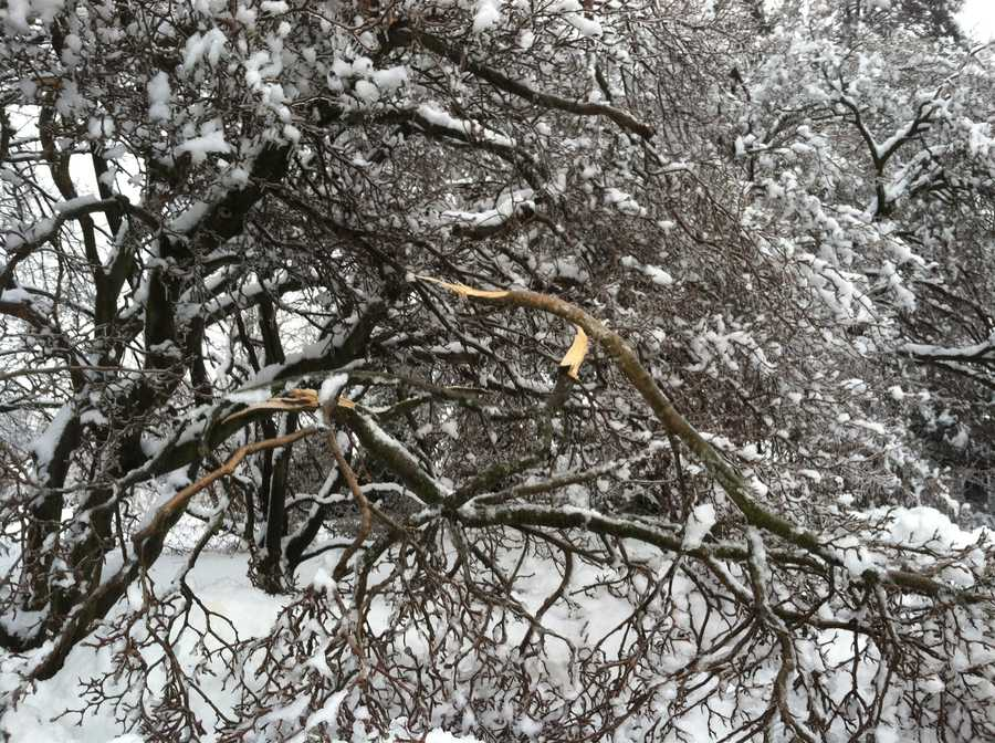 The trees outside WGAL's Lancaster studios have taken a beating this week, Wednesday at 8 a.m.