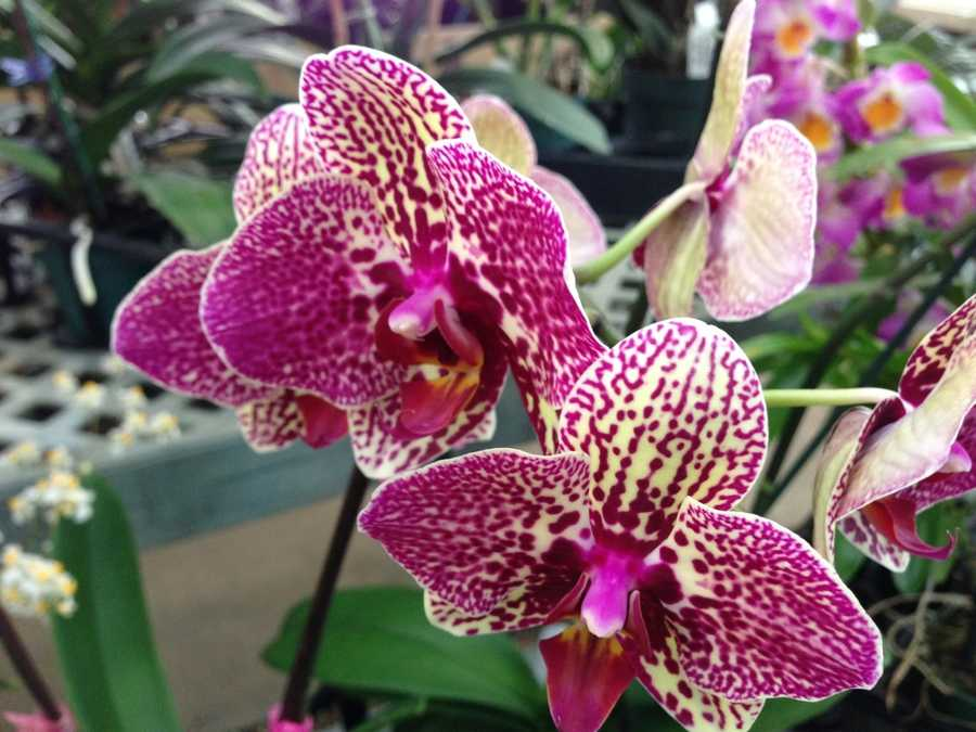 It's the Little Books Orchids greenhouse.