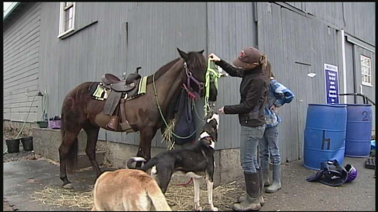 News 8 Today 4.14.14 saved pony
