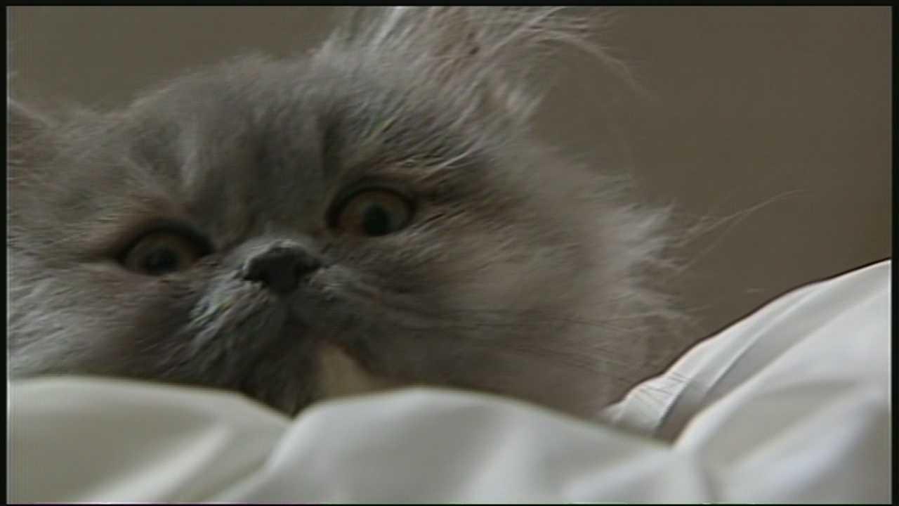 Veteran's kitten 4.24.14