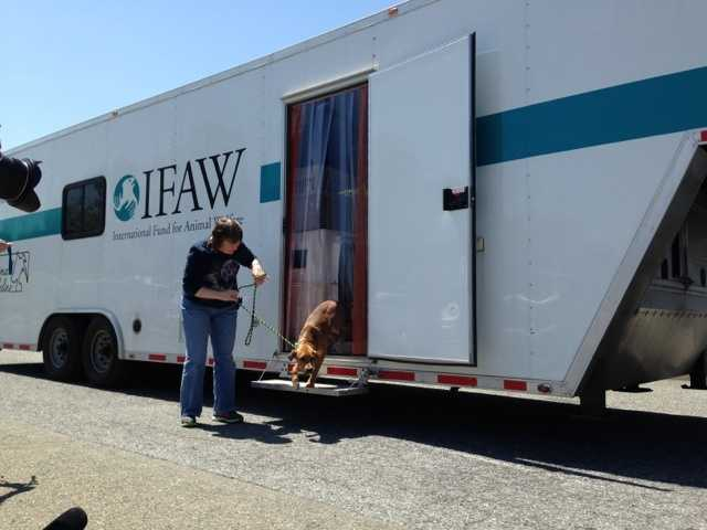 The International Fund for Animal Welfare saved the dogs and transported them.