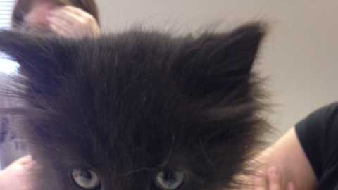 Two kittens are alive and doing well after someone threw them out of a moving car in Lancaster. Their names are Karma and Kismet.