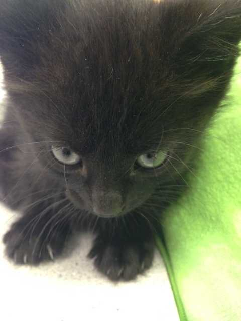 The rescue group says the kittens were thrown from a car onto Centerville Road.
