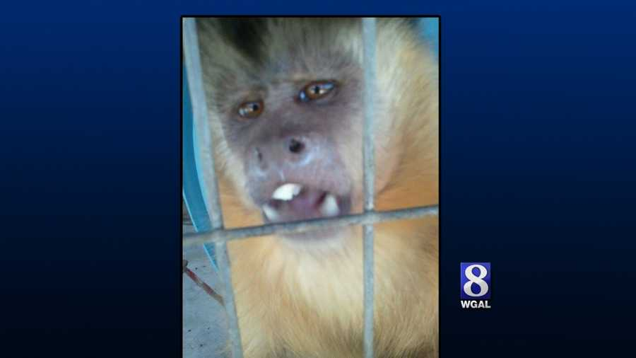 The search was on for the monkey since this weekend when it escaped after a fire destroyed an exotic pet shelter in Adams County.