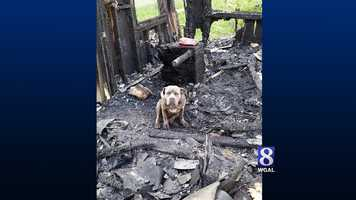 The shelter credits their dog with waking them up during the fire.