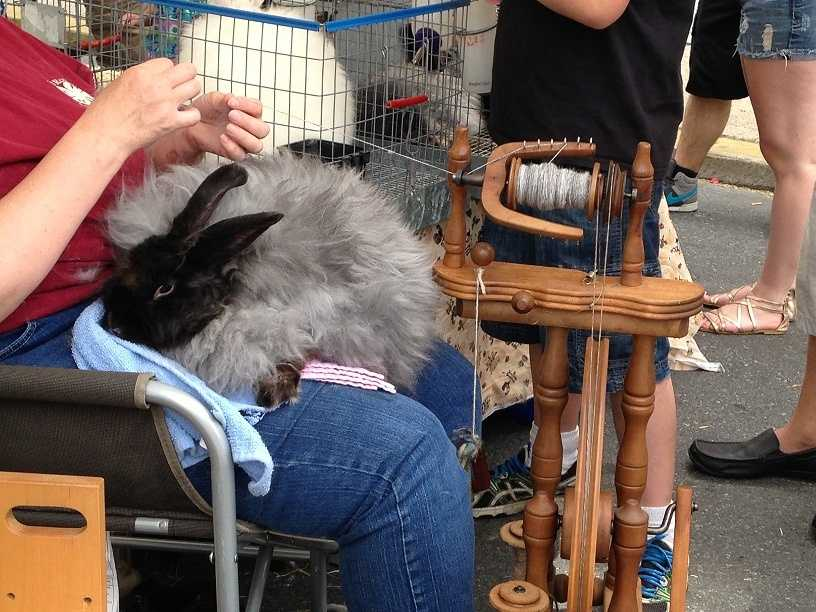 Ellen Anderson of Flying Fibers uses fur from a rabbit to make thread. Visit www.flyingfibers.com to learn more.