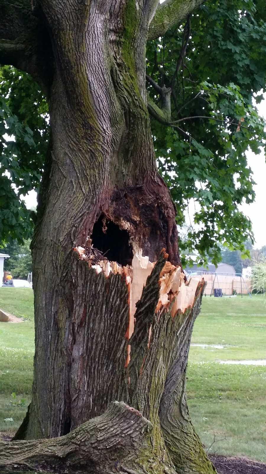 Spot where lightning struck a tree on Evergreen Road in Lebanon County.