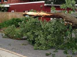 Branches of trees fell down all over the area.