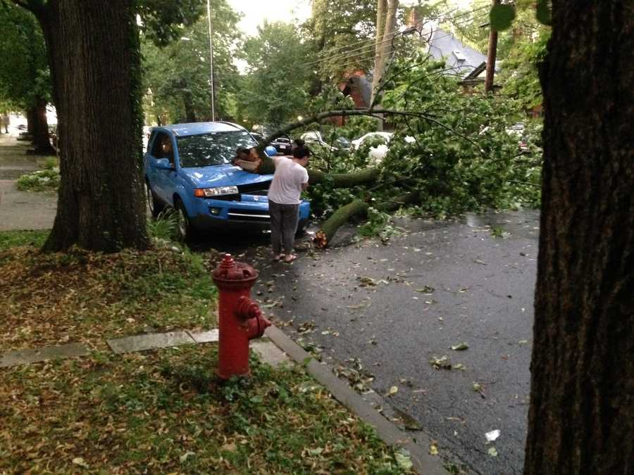 This tree fell on a car on the 200 block of North Charlotte Street in Lancaster.
