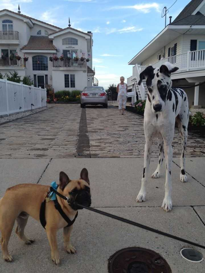 Kim's Facebook page also features photos of Ramy, her three-year-old French Bulldog. Here's one of him with his canine pal, Harley.