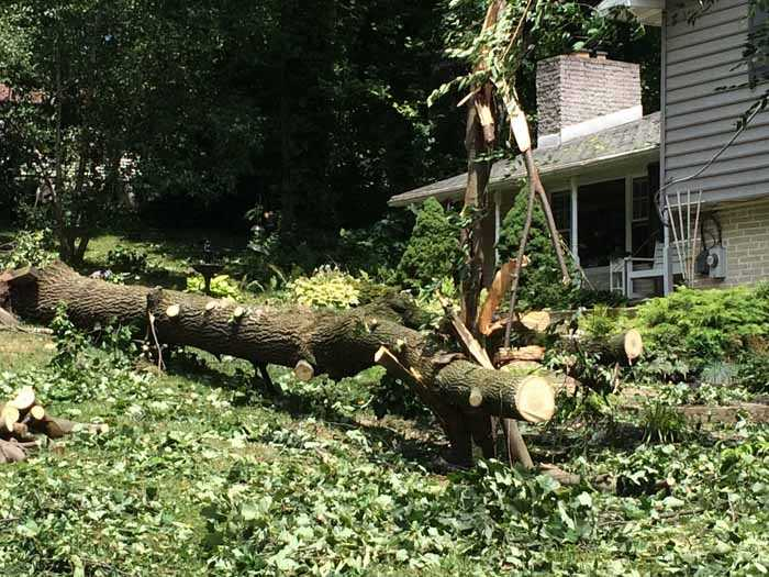 The storm knocked down an 85-foot poplar tree on Beaverton Drive, in Windsor Township.