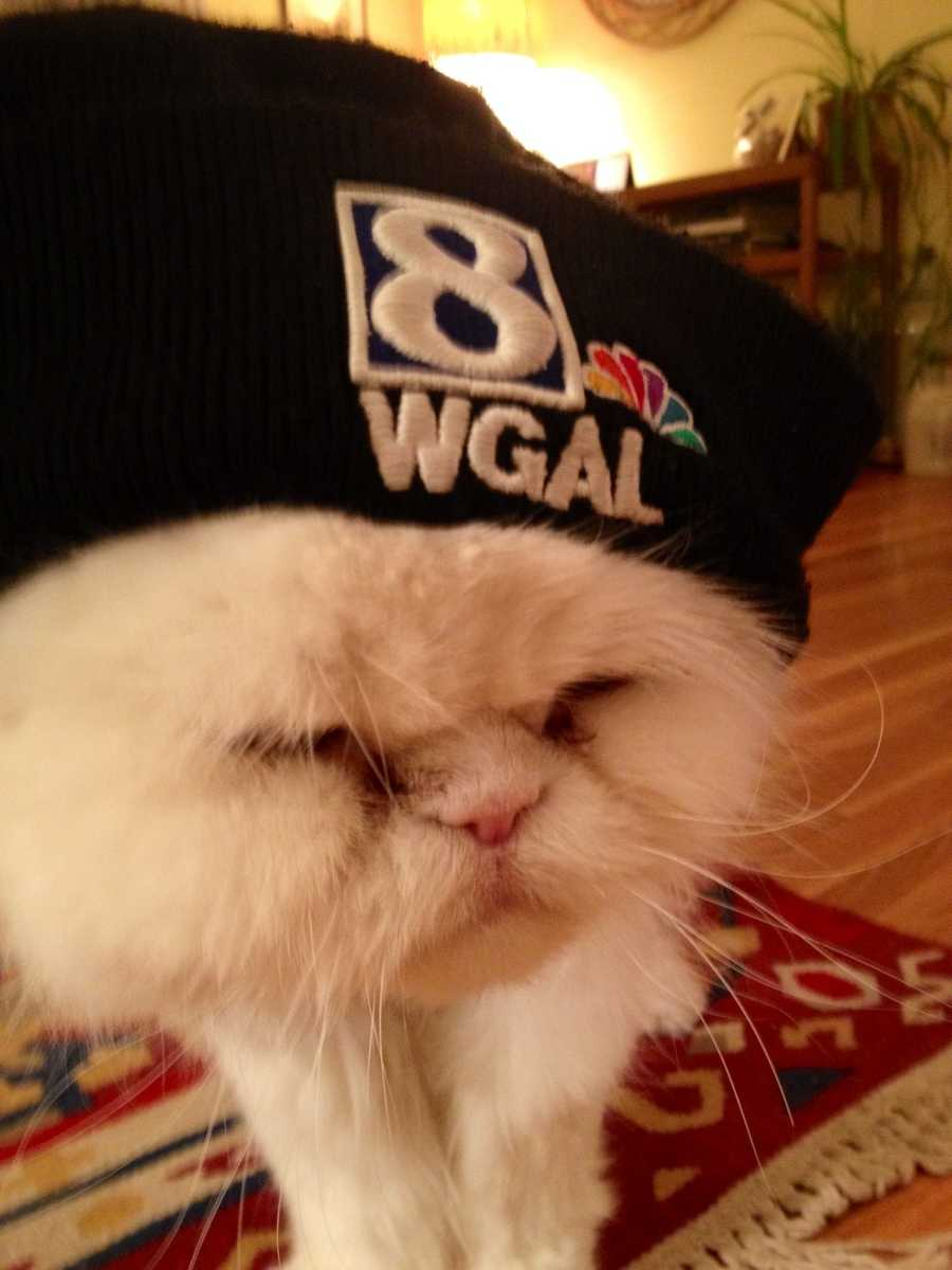 Pets play a big role in the lives of many Susquehanna Valley residents - and they do the same for many here at WGAL News 8. You can find pet news and information anytime on the Pets WGAL Facebook page. Photojournalist Will Elliot's Persian, Taylor, is pictured. Click through to see more staff and viewer pet pics!