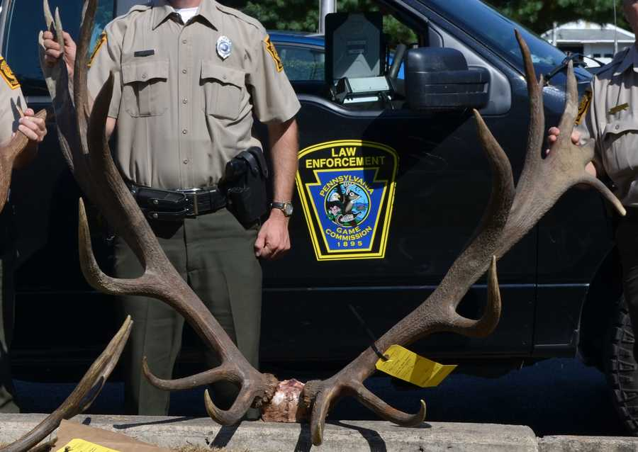 Three elk were shot, according to officials, but the biggest would have ranked as the third biggest ever taken in the state had it been shot legally.