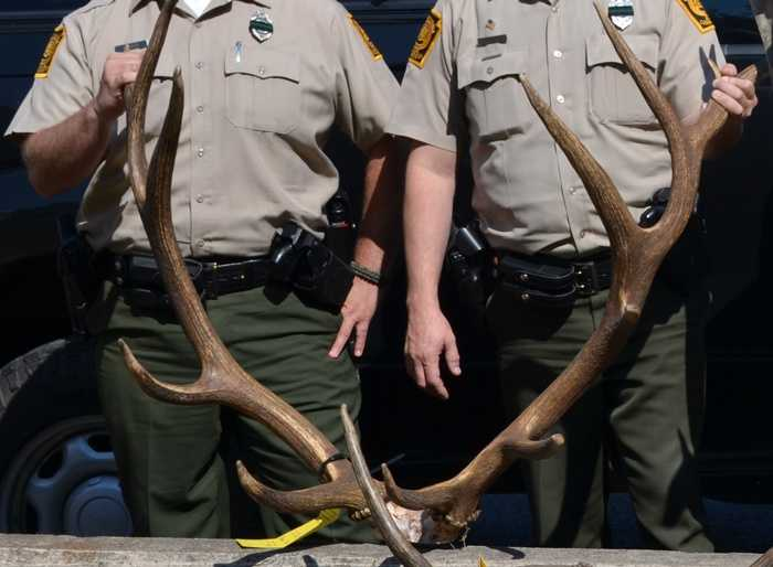 Officials said the men spotlighted the elk and then shot them from a vehicle.