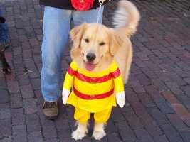 Halloween is right around the corner! What should you dress your pet up as this year?