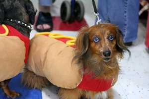 Share photos of your pets in their Halloween costumes on WGAL's u local!