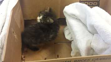 The staff at the Pet Pantry of Lancaster County say they found a box with a towel over it outside of their building Friday morning.