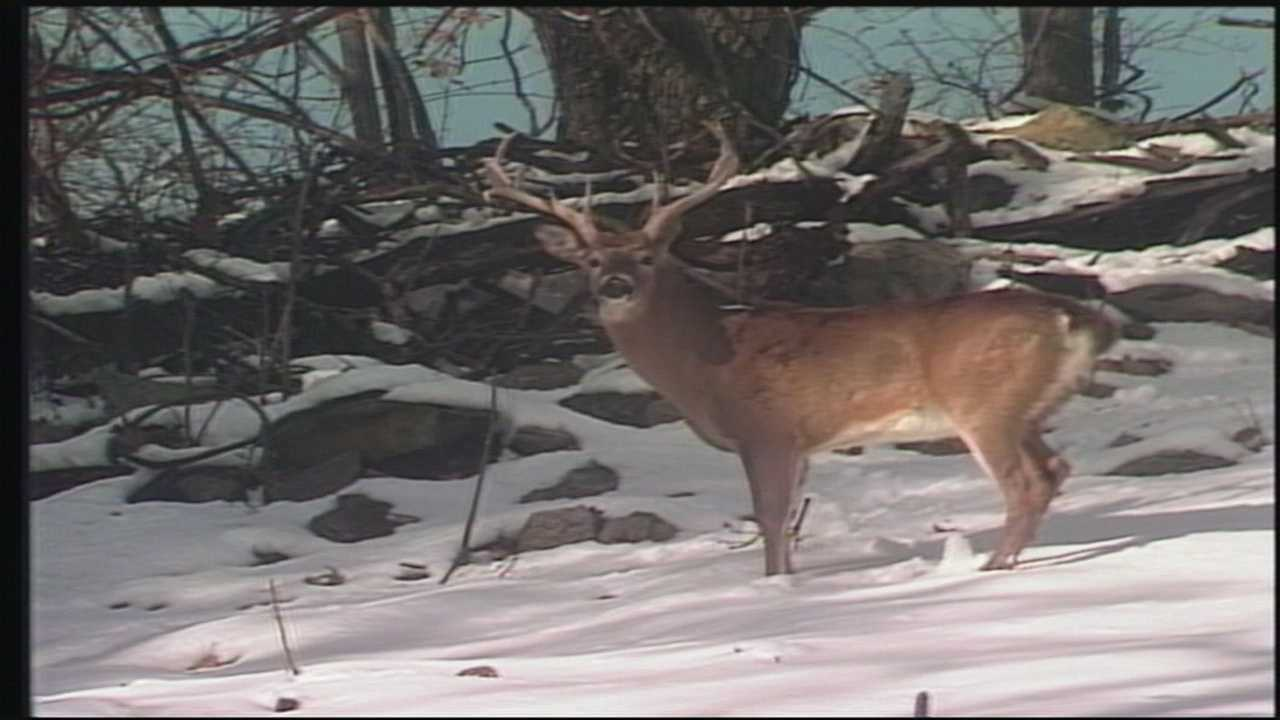 The white-tailed deer, Pennsylvania's state mammal… we thrill at the sight of them. The question is, how many do we want to see?